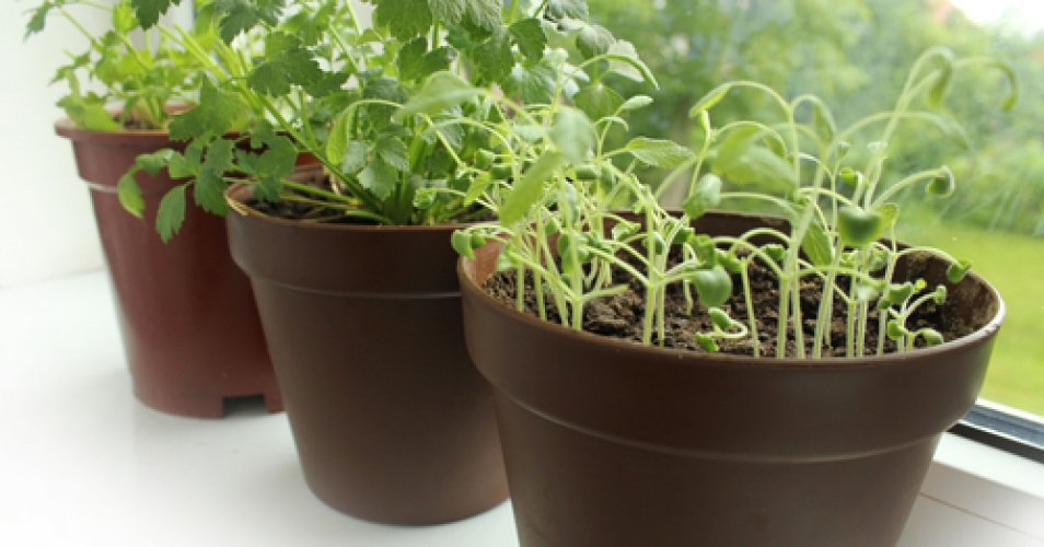 5 Tips for an Easy Window Herb Garden